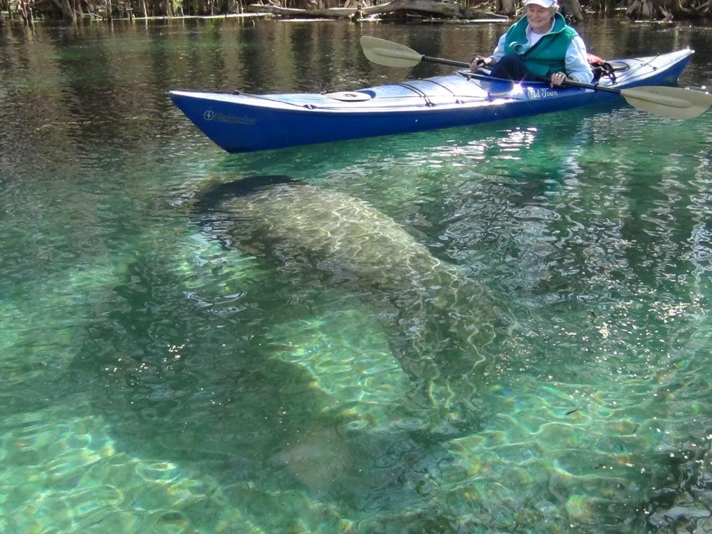 Ichetucknee River Kayak and Canoe trips in Florida